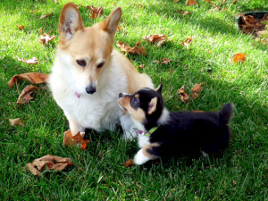How Much Does Electric Pet Fence Installation Cost