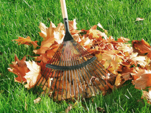How Much Does Fall Yard Clean Up Cost