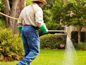 How Much Do Lawn Treatments Cost