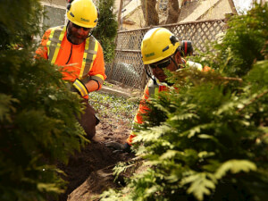 How Much Does Shrub Removal Cost