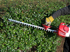 How Much Does Shrub Trimming Cost