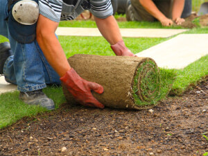 How Much Does Sod Installation Cost