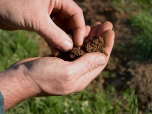 How Much Does Soil Testing Cost