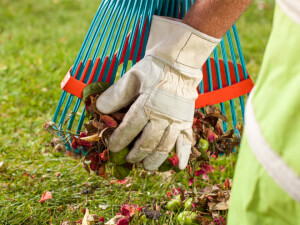 How Much Does Spring Yard Clean Up Cost