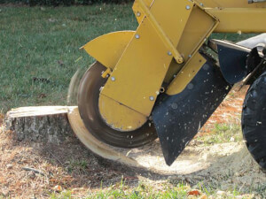 How Much Does Tree Stump Removal Cost
